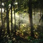 Adam Shoalts Sunshine Amazon