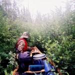 Adam Shoalts Tangled Bushes